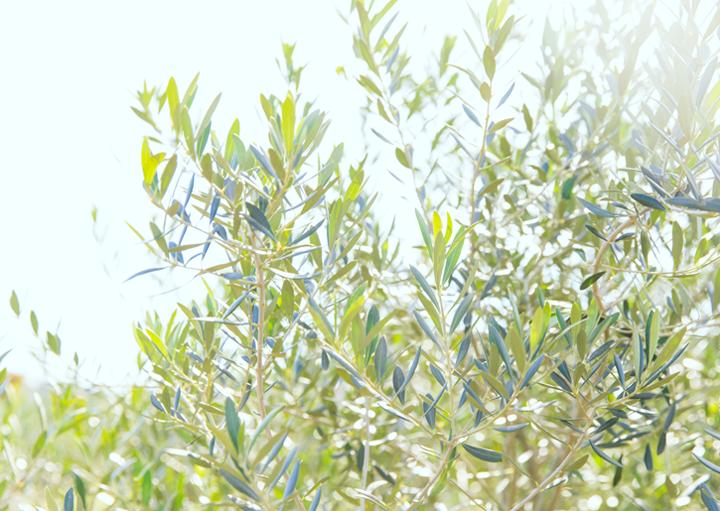 WEB用画像撮影|日置オリーブファーム