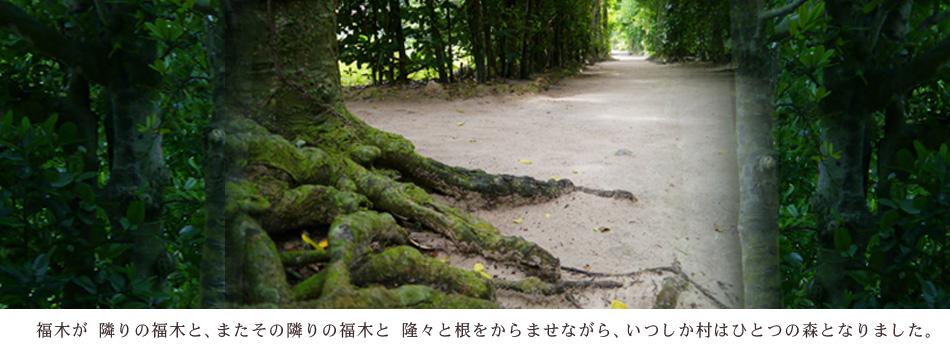福木が隣の福木と、またその隣の福木と隆々と根をからませながら、いつしか村は一つの森となりました。
