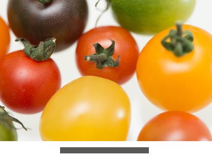 名護 上地さんのミニトマト